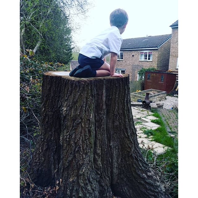 Hmm hear Mummy Mummy from outside. Go out to discover Sqk has clambered onto tree stump which is 5ft or so.